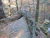 55-skamieniale-miasto-w-ciezkowicach-aligator-fot-piotr-firlej-www-skamienialemiasto-pl_